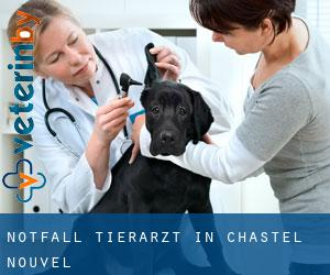 Notfall Tierarzt in Chastel-Nouvel