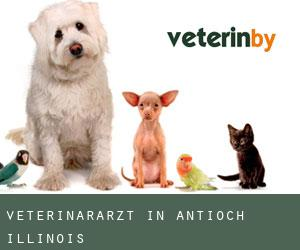 Veterinärarzt in Antioch (Illinois)